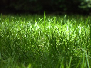 Using Green Methods to Get a Green Lawn
