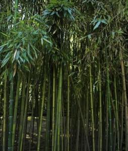 bamboo flooring & bamboo floors