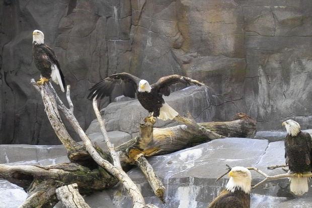 Birds In Wildlife Conservation Go Green Academy